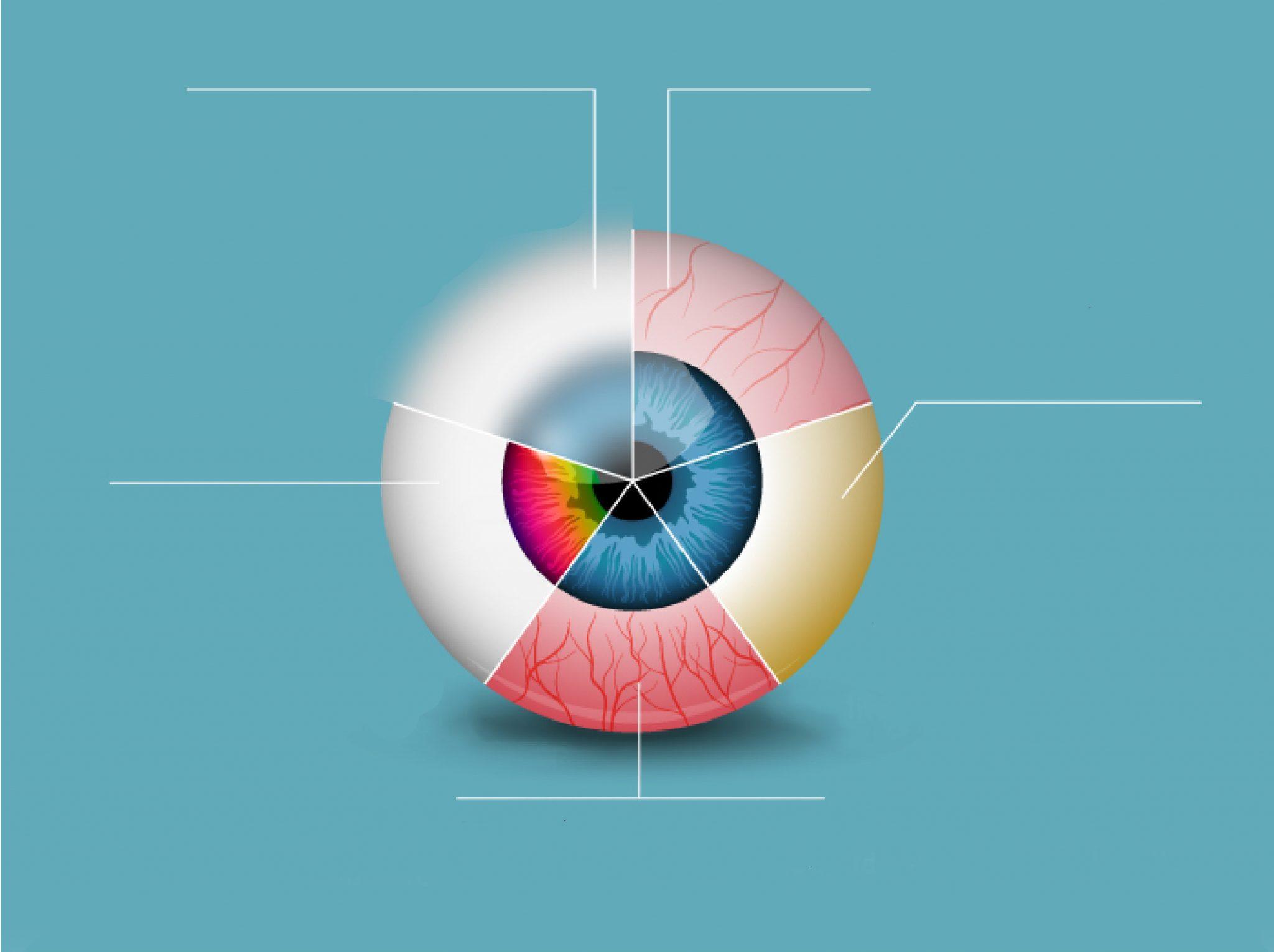 همه چیز در چشمان شماست! [اینفوگرافیک]
