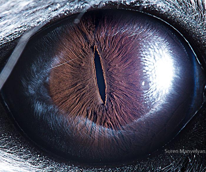 چشم حیوانات