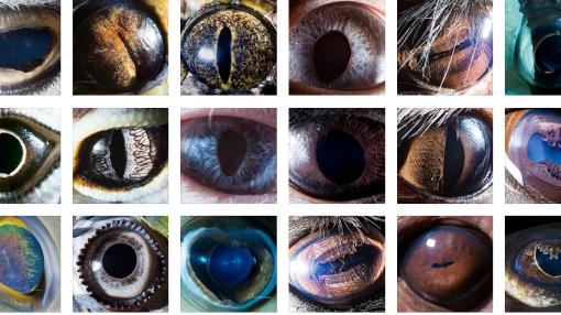 30 عکس فوقالعاده زیبا، عجیب و شگفتانگیز از چشم حیوانات