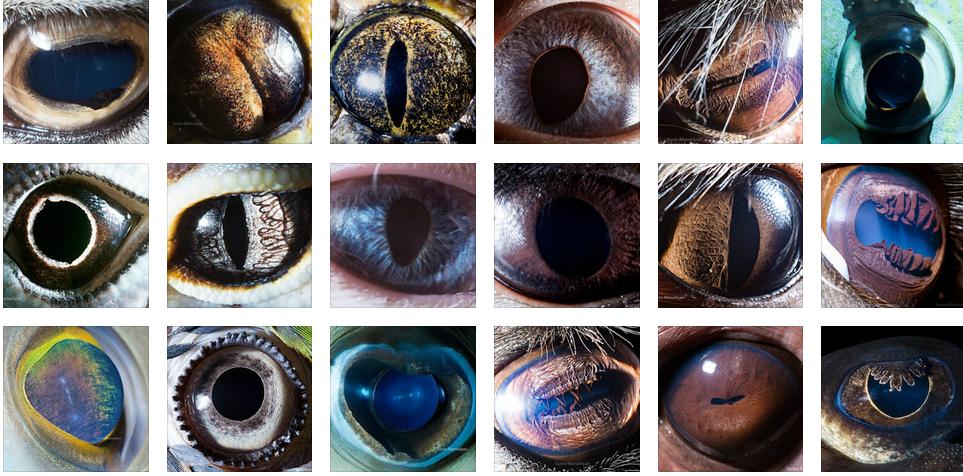 ۳۰ عکس فوقالعاده زیبا، عجیب و شگفتانگیز از چشم حیوانات